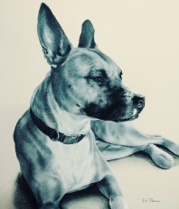 "Miss Molly, 14"" x 12"", charcoal on pastel paper"